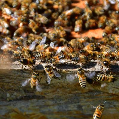 2020 05 abeilles 07 web