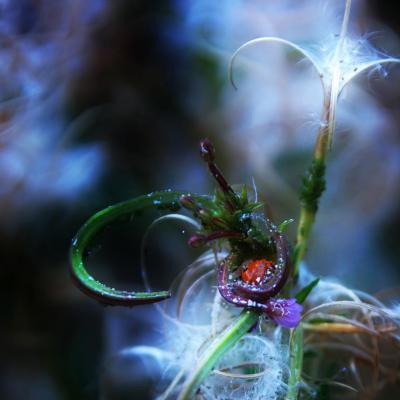 Ladybug s nirvana web