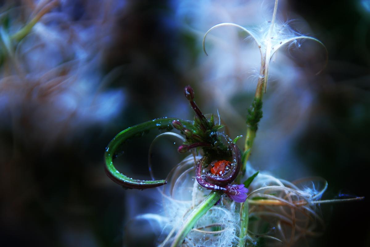 Ladybug's nirvana